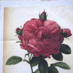 Ready Fabric Panel-  Red Rose in Botanical  style